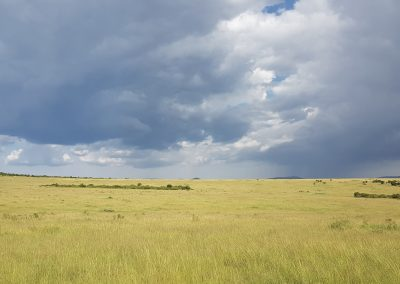 Massai Mara