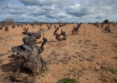 Weingarten, Rioja, Spanien