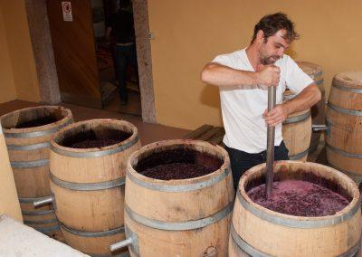 Wein keltern nahe Bozen