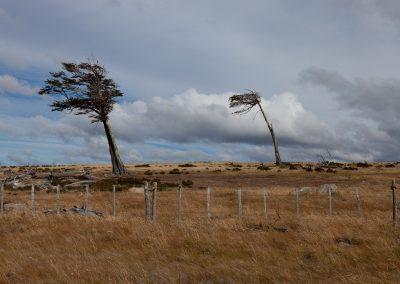 Zwischen Porto Natales und Punta Arenas, Chile