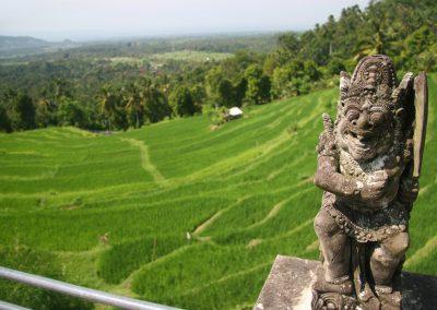 Reisfelder auf Bali, Indonesien