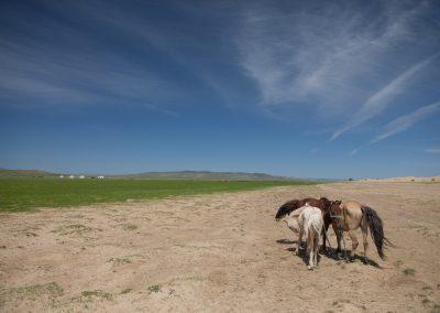 Pferde am Wüstenrand