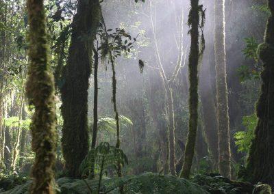 Lichtspiel im hochgelegenen Nebelwald, Costa Rica