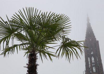 Palme im Nebel, Kathedrale von Reims, Champagne, Frankreich