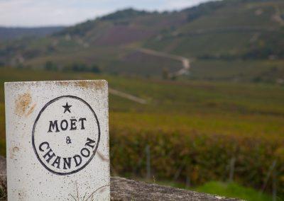 Moet's Weingarten, Champagne, Frankreich