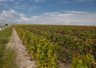 Weingarten, Champagne, Frankreich
