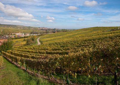 Weingärten, Elsass, Frankreich