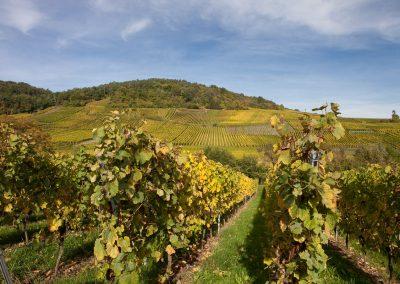 Weingarten, Elsass, Frankreich