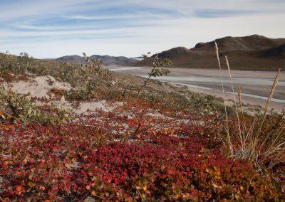 Spärlicher Bewuchs, Kangerlussuaq, Grönland
