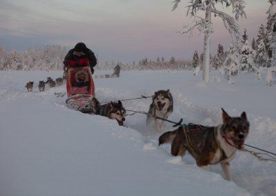 Hundeschlittentour, Särkimukka, Schweden