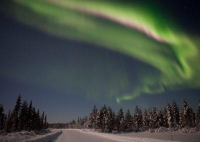 Nordlicht, Särkimukka, Schweden