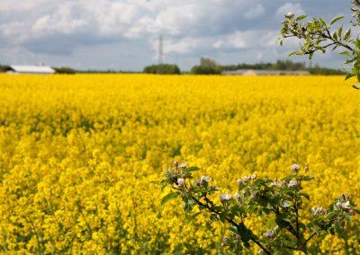 Blumenwiese, Dänemark (am Weg nach Norwegen)