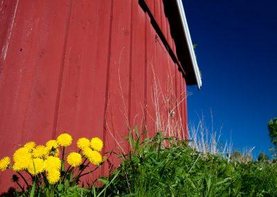 Farbenpracht am Saltstraumen (Gezeitenstohm) nahe Bodo, Norwegen