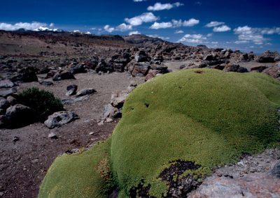Moos und Steine, Peru