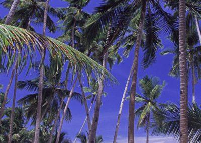 Paradiesstrand, Panglaoisland, Philippinen