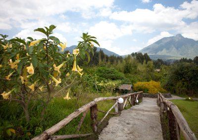 Volcanoes NP, Ruanda