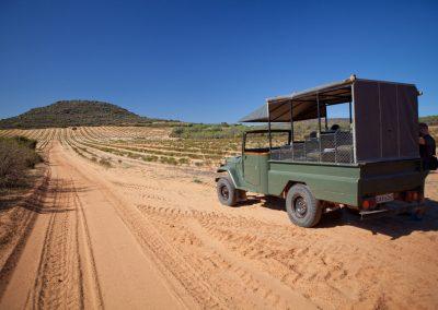 Rotbuschtee-Plantage, Südafrika
