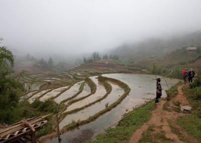 Reisfelder, Sa Pa, Vietnam