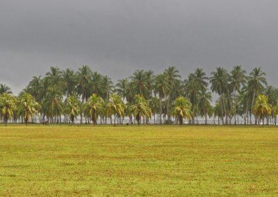 Palmen am Strand, Westküste, Costa Rica