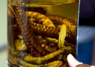 Schlangenschnaps, Guilin, China